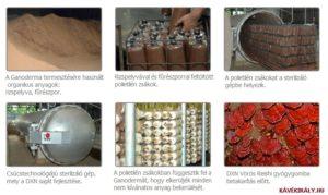 A DXN Ganoderma gyártási folyamata