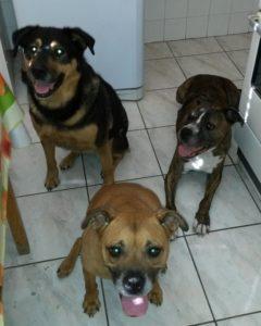 3 kutyám a konyhában