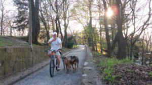 Kerékpározás három jólnevelt kutyával