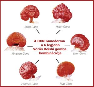 DXN vörös Reishi gombák