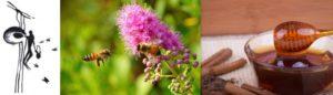 Barlangrajz mézgyűjtésről, vadméhek ibolya előtt és méz fahéjjal