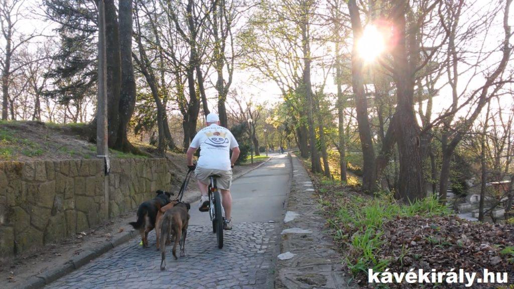 Kutyasétáltatás kerékpárral