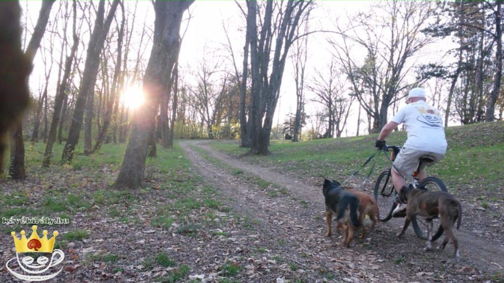 Kerékpározás három kutyával hegyre fel