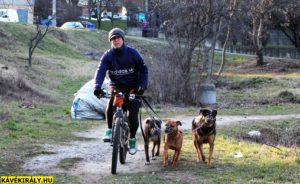 Három kutya sétáltatása kerékpárral a hatékony lemozgatás érdekében