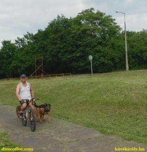 Az online hálózatépítés a DXN kávéval beilleszkedik a napi rutinba, melyben alap a naponta háromszori biciklizek a kutyáimmal.