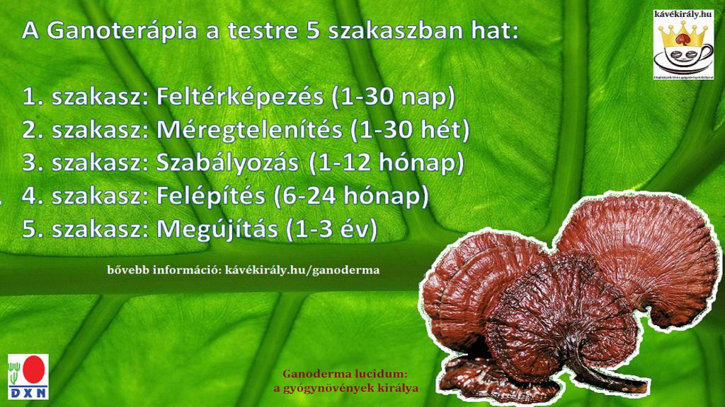 A Ganoderma micélium kapszula a Ganoterápia része