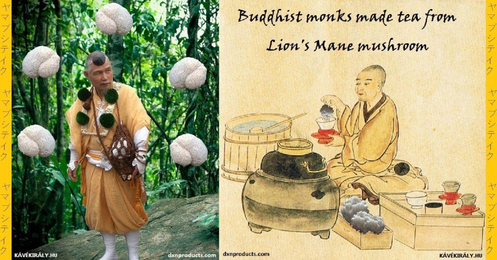 A Yamabushi-szerzetesek az Oroszlán sörény gyógygombát is használták tea készítéséhez