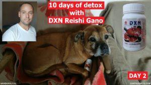 Cukiság és egészség: kutyám DXN Reishi Gano porral